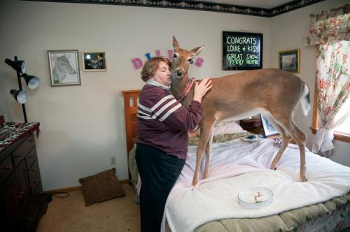 deerbedroom
