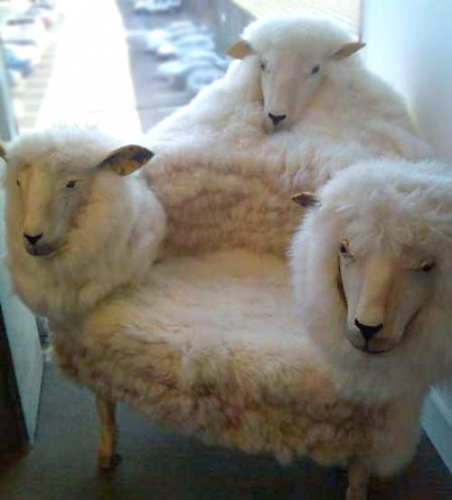 goat chair