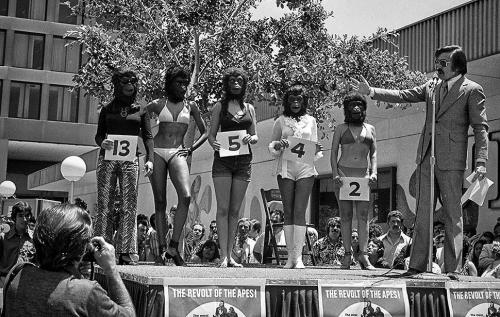 miss beautiful ape contest, 1972