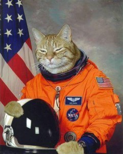 cat-in-a-space-suit