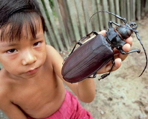 giantbug