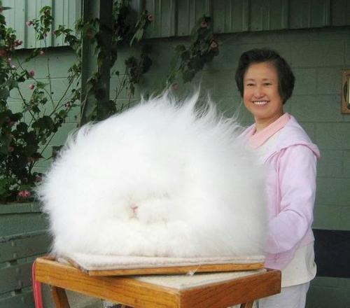 bunny(2)