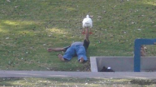 duck drunk