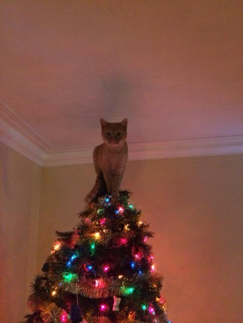 king of tree
